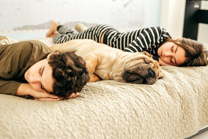 Do Pets Dream?