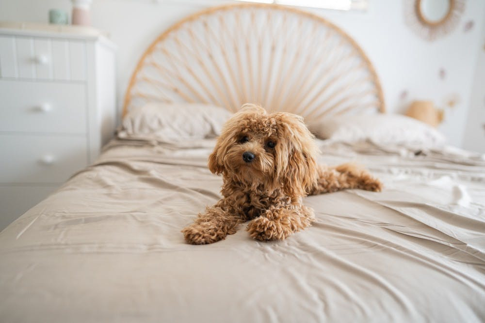 8 Reasons To Switch To Bamboo Bedding